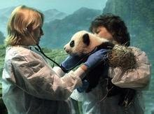 Panda Keeper in Bifengxia Base