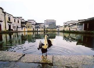 Life in Hongcun
