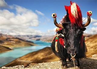 Discover Tibet from Hong Kong