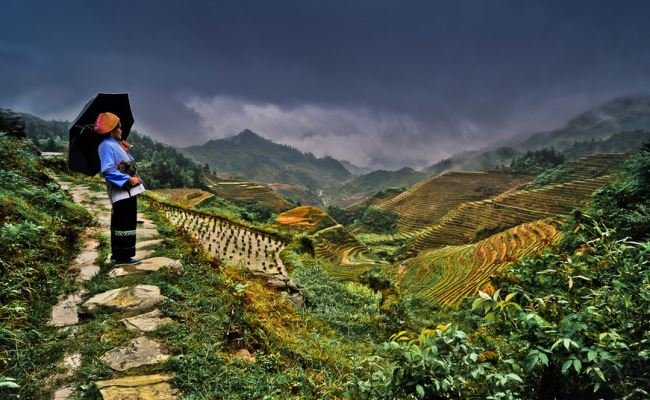 Longji Rice Terrace Fields