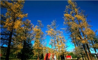 Fall in Hemu, Xinjiang