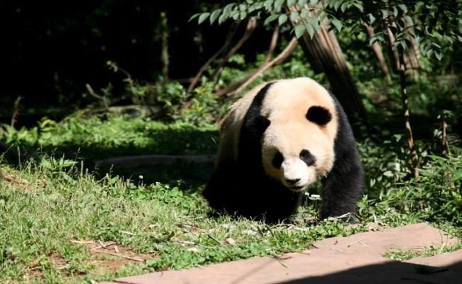 Lovely China Holiday with Pandas