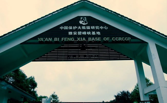 Bifengxia Panda Breeding Center