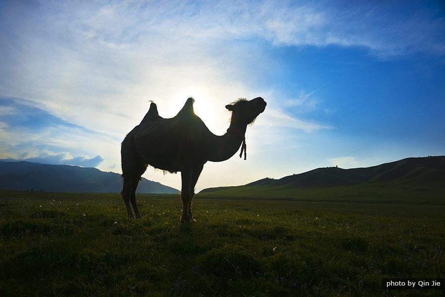 Memories of Xinjiang Tour