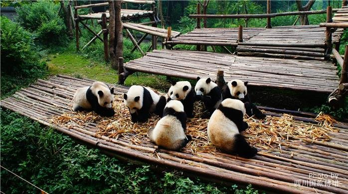 Chengdu and Guilin Highlights with Best of China Tour