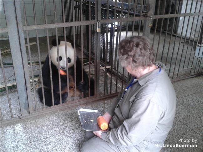 Chengdu Bifeng Valley Panda Visit