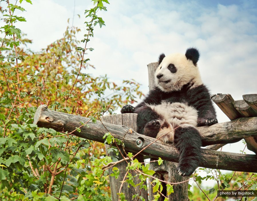 Panda Keeper Program and Chengdu Highlights Tour