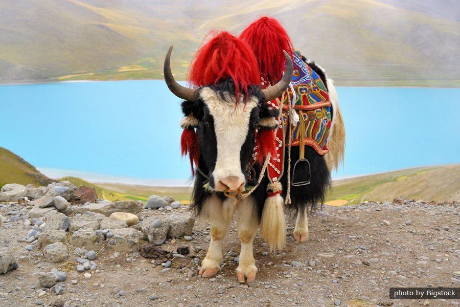 Tibet Tour from Hong Kong