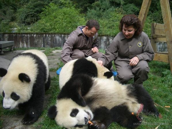 1-Day Dujiangyan Panda Keeper Program